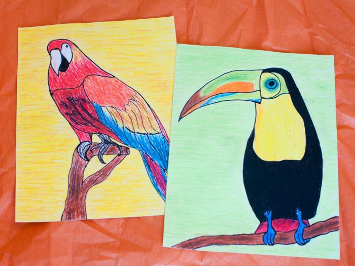 Oil Pastel Art:  Tropical Birds: